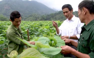 Người dân xã Hồng Ca góp phần cùng cả huyện mở rộng vùng dâu tằm lên 500 ha.