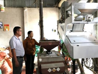 Vùng Mường Lò, rất nhiều cơ sở, hộ kinh doanh đã đầu tư máy móc hiện đại để sản xuất, kinh doanh lúa gạo.