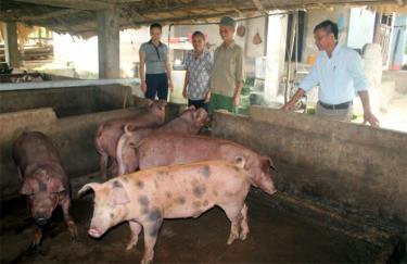 Nhiều hộ dân ở xã Quy Mông thoát nghèo nhờ phát triển chăn nuôi.