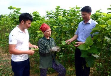 Lãnh đạo Đảng ủy xã Xuân Ái thăm mô hình trồng dâu nuôi tằm của chị Nguyễn Thị Phương, thôn Sông Hồng.