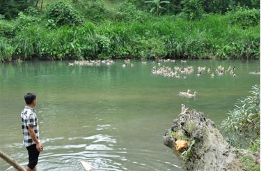 Mô hình nuôi vịt bầu của Hợp tác xã Dịch vụ chăn nuôi Lâm Thượng đang phát huy hiệu quả kinh tế.