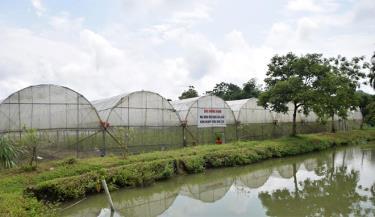 Khu nhà kính trồng dưa lê Hàn Quốc.