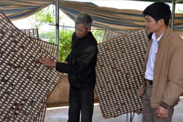 Mô hình trồng dâu nuôi tằm của ông Nguyễn Văn Thân ở thôn Đồng Sâm cho thu nhập ổn định và cao hơn nhiều lần so với trồng lúa.