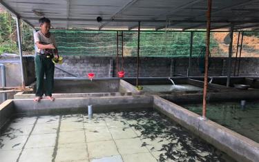 Mô hình nuôi cá tầm của ông Trần Cao Thắng mang lại hiệu quả kinh tế cao.
