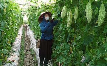 Nông dân xã Nghĩa An, thị xã Nghĩa Lộ chuyển đổi cơ cấu cây trồng để phát triển kinh tế.