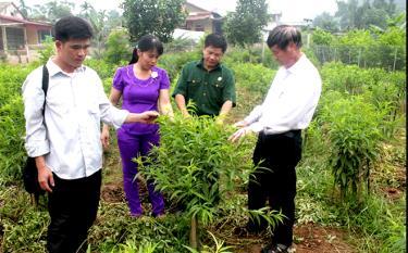 Cán bộ Hội Phụ nữ xã Đào Thịnh cùng các đoàn thể thăm mô hình trồng đào, thu nhập trên 50 triệu đồng/năm.