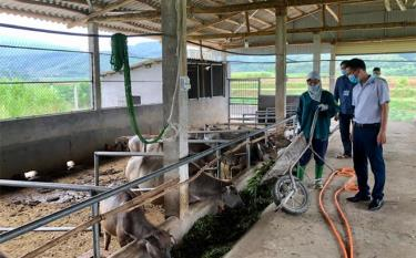 Lãnh đạo Phòng Nông nghiệp và Phát triển nông thôn huyện Văn Yên kiểm tra mô hình chăn nuôi trâu bán công nghiệp tại xã Tân Hợp.