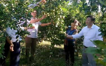 Những mô hình trồng cây ăn quả có múi mang lại hiệu quả kinh tế cao cho người dân xã Hồng Ca, huyện Trấn Yên.