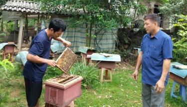 Mô hình phát triển kinh tế nuôi ong lấy mật của anh Nguyễn Gia Thiều, ở tổ 6, phường Yên Thịnh.