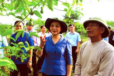Đồng chí Phạm Thị Thanh Trà - Ủy viên Ban Chấp hành Trung ương Đảng, Bí thư Tỉnh ủy, Chủ tịch HĐND tỉnh thăm mô hình trồng chanh leo tại xã Phù Nham, huyện Văn Chấn.