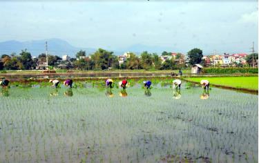 Tranh thủ thời tiết thuận lợi, người dân Lục Yên đang tập trung gieo cấy lúa mùa.