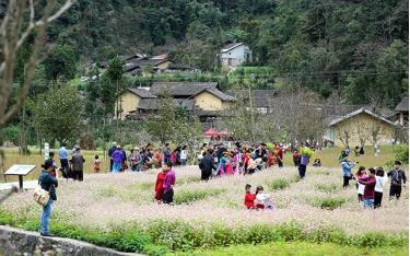 Du khách tham quan vườn hoa tam giác mạch tại Hà Giang
