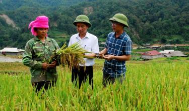 Đồng chí Vũ Lê Chung Anh - Phó Bí thư Huyện ủy, Chủ tịch UBND huyện Trạm Tấu cùng lãnh đạo Phòng Nông nghiệp và Phát triển nông thôn kiểm tra canh tác lúa tại xã Hát Lừu.