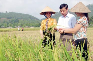Đồng chí Chu Quốc Tuấn - Phó Chủ tịch UBND thị xã Nghĩa Lộ trao đổi với người dân về chăm sóc, thâm canh giống lúa Séng cù trên cánh đồng Mường Lò.