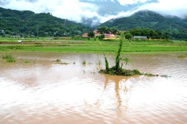 Mưa lớn làm ngập úng, gây nhiều thiệt hại ở xã Quang Kim (Bát Xát - Lào Cai).