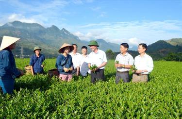 Đồng chí Chu Đình Ngữ - Ủy viên Ban Chấp hành Đảng bộ tỉnh, Bí thư Huyện ủy Văn Chấn (thứ ba, phải sang) kiểm tra sản xuất kinh doanh chè tại thị trấn Sơn Thịnh.