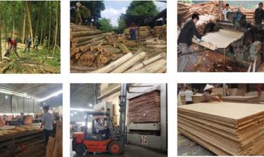 Ngành gỗ dán Việt Nam đang phải đối mặt với nhiều khó khăn thách thức từ các vụ kiện gian lận thương mại từ các thị trường xuất khẩu lớn. (Ảnh minh họa: KT)