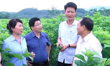 Các đồng chí lãnh đạo HĐND, Ủy ban MTTQ tỉnh và huyện Trấn Yên thăm vùng dâu Việt Thành. (Ảnh: Mạnh Cường)