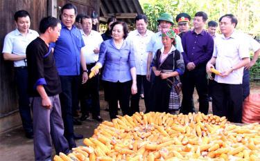Đồng chí Phạm Thị Thanh Trà - Ủy viên Ban Chấp hành Trung ương Đảng, Bí thư TỈnh ủy, Chủ tịch HĐND tỉnh cùng các đồng chí lãnh đạo thăm mô hình sản xuất giỏi ở xã Nậm Khắt.