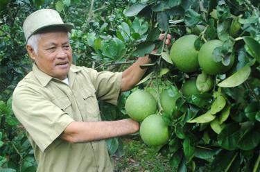 Thương binh hạng 2/4 Nguyễn Văn Thành chăm sóc vườn cây ăn quả.