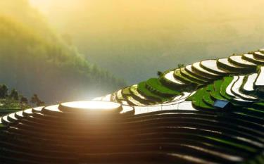 The beauty of terraced rice fields