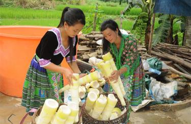"Farmers in Kien Thanh commune, Tran Yen district harvest ""Bat do"" bamboo shoots."