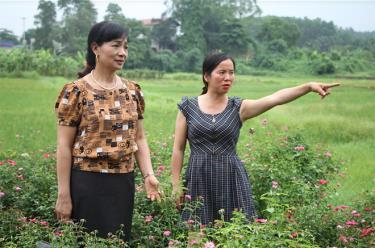 Chị Nguyễn Thị Nhường (bên phải) là tấm gương sáng về vượt khó vươn lên phát triển kinh tế ở xã Tuy Lộc.