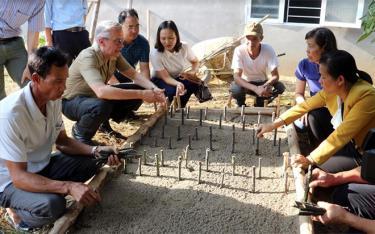 Hội Nông dân tỉnh phối hợp với các chuyên gia Chương trình FFF phổ biến kỹ thuật trồng cây lá khôi cho hội viên nông dân xã Đào Thịnh, huyện Trấn Yên.