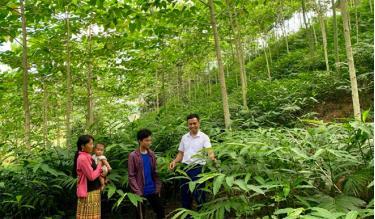 Mô hình trồng sa nhân dưới tán cây gáo vàng của anh Hờ A Sênh (đứng giữa) bước đầu mang lại hiệu quả kinh tế.