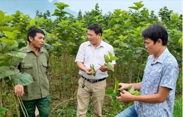 Được điều động luân chuyển, cán bộ thường xuyên bám sát cơ sở. Ảnh: Đồng chí Đinh Văn Trường - Bí thư Đảng ủy thị trấn Sơn Thịnh (đứng giữa) nắm tình hình sản xuất tại cơ sở.
