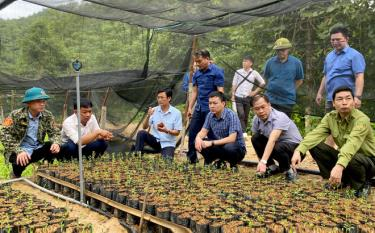 Leaders of Yen Binh district visit a nursery of Tan Thanh An Construction and Trade Company.