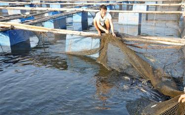 Yen Bai's Yen Binh district strives to have 2,500 – 3,000 fishing farming cages by 2025.