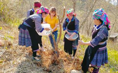 Members of the union's chapter in Mu Cang Chai district join a campaign of planting 5000 to day trees in the area.