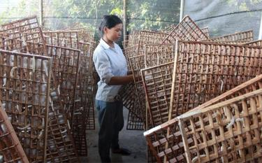 The model of silk production chain generates high economic value in Son Thinh town
