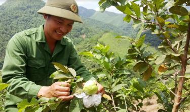Niềm vui của anh Nông Kim Ngọc khi cây trái sinh sôi.