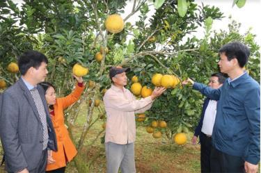 Huyện Trấn Yên tập trung xây dựng vùng cây ăn quả hàng hóa mang lại hiệu quả kinh tế cao.