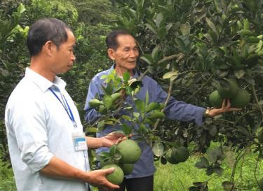 Một vườn cây ăn quả mang lại hiệu quả kinh tế cao ở xã Hưng Thịnh.
