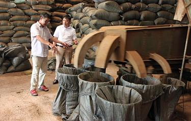 Sản xuất chè đen tại Hợp tác xã Kiến Thuận, xã Bình Thuận, huyện Văn Chấn.