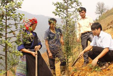 Cán bộ lâm nghiệp huyện Mù Cang Chải hướng dẫn người dân kỹ thuật chăm sóc Sơn tra.