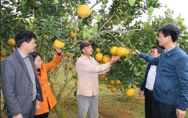 Lãnh đạo huyện Trấn Yên kiểm tra thực tế tại một địa phương phát triển mạnh cây ăn quả có múi.