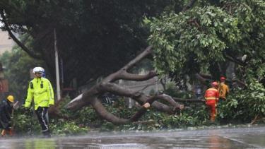 Cây đổ tại thành phố Hạ Môn, tỉnh Phúc Kiến. Ảnh: Nhật báo Phúc Kiến.