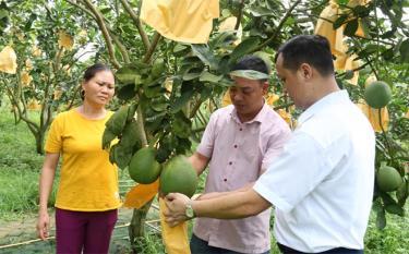 Mô hình trồng bưởi da xanh của gia đình anh Hà Đình Giáp, thôn Yên Ninh, xã Hưng Thịnh, huyện Trấn Yên có thu nhập trên 200 triệu đồng từ vườn bưởi.