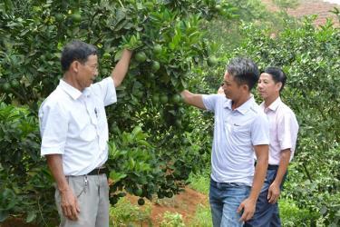 Anh Đỗ Quang Trọng (thứ hai, bên phải) giới thiệu mô hình trồng cam với lãnh đạo xã.