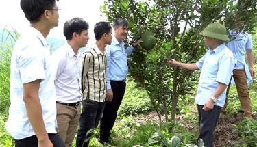Officials of Van Chan district visit a macadamia farming model in Gia Hoi commune.