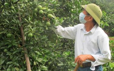 Đã ngoài 70 tuổi, thương binh Đoàn Thế Yêm vẫn cần cù chăm sóc cây trồng.