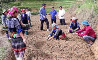 Cán bộ Hội Nông dân huyện Mù Cang Chải hướng dẫn người dân xã Dế Xu Phình trồng thử nghiệm cây cỏ ngọt.