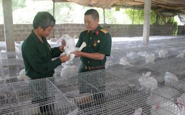 Cựu chiến binh Phạm Hữu Chanh, thôn 3, xã Tân Thịnh (Văn Chấn) nuôi thỏ New Zealand thu nhập gần 100 triệu đồng/năm.