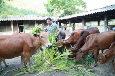 Many crop and animal farming models have been applied in Yen Bai.