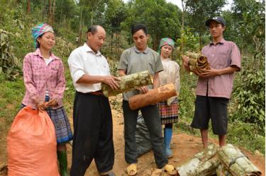 Ông Giàng A Phử (thứ hai từ trái sang) trao đổi với nhân dân về kinh nghiệm thu hoạch quế.