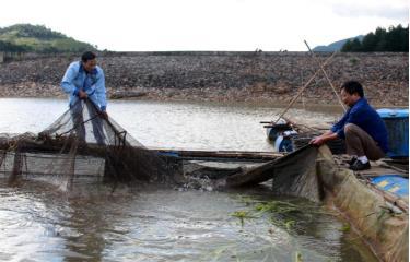 Người dân huyện Mù Cang Chải nuôi cá lồng tại khu vực chứa nước đập thủy điện Khao Mang Thượng.